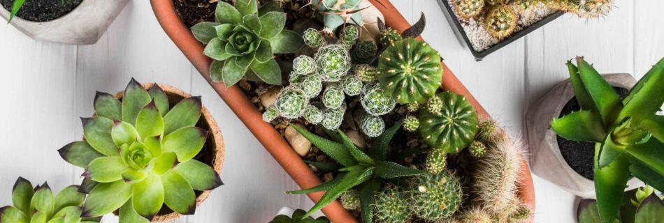 New information on cactus gardening